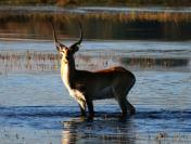Storks, swamps and hot springs in Zambia