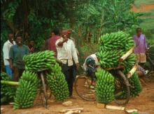 Transporting food to the markets in Uganda
