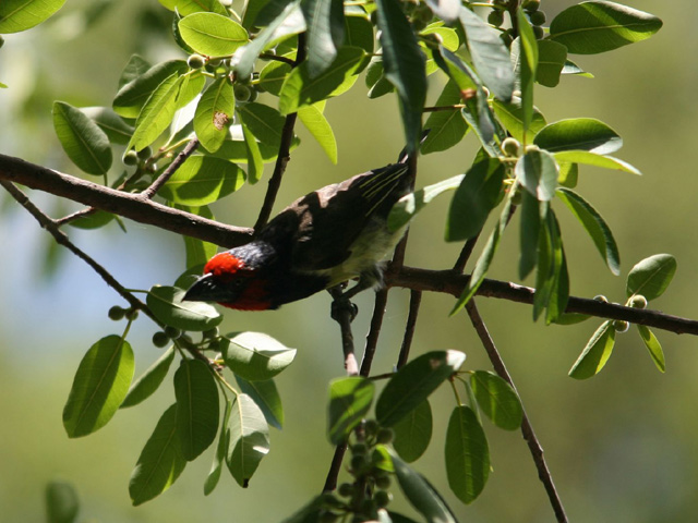 Livingstone Birding Trail