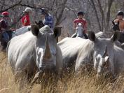 The life and soul of South Africa on safari