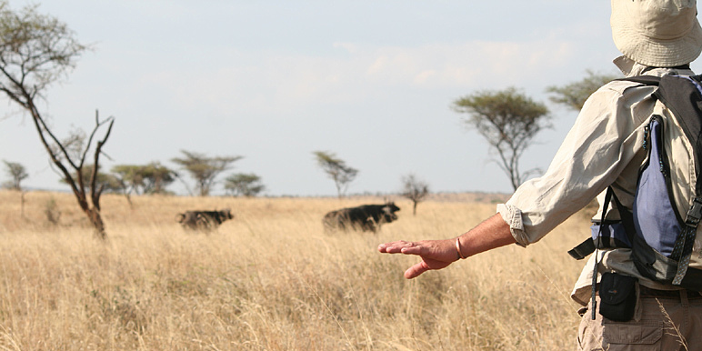 Traditional walking safari with Robin Brown in the Serengeti courtesy Debbie Addison