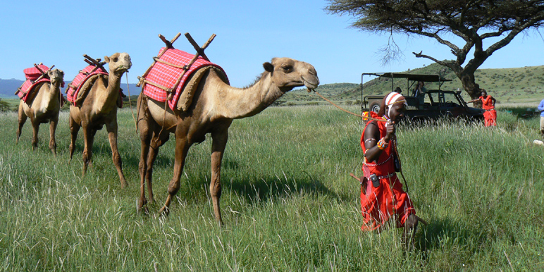 Walking wild on a camel safari in Kenya
