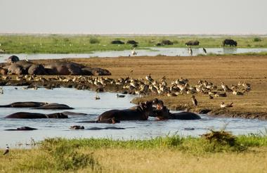 Day 5 - Explore the Serengeti home to the Wildebeest and Zebra migration