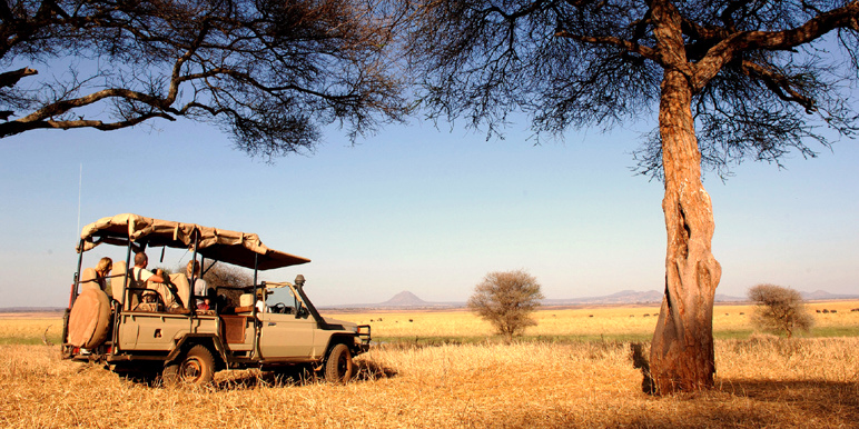 Tarangire game drive courtesy John Corse of Nomad Safaris