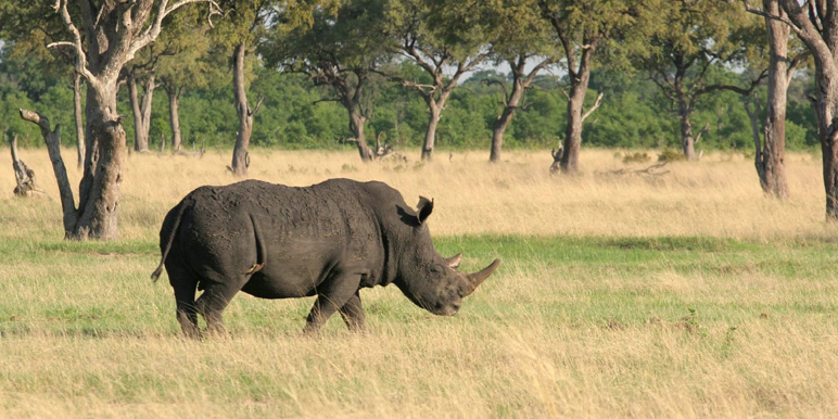 Hwange rhino courtesy Chris Worden