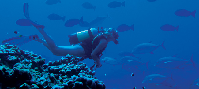 north_island_diving[1]