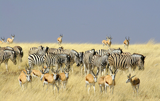 "Africa's best known ""wing safari"""