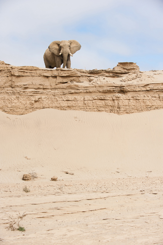 Desert adapted elephant by Olwen Evans courtesy Wilderness Safaris