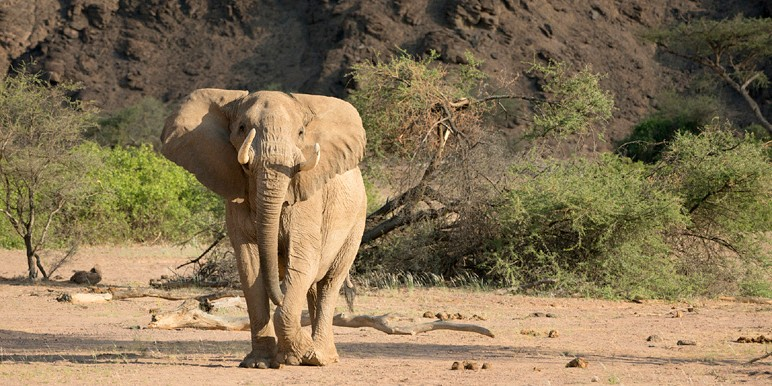 Skeleton coast safari hoanib Polisieman by Olwen Evans courtesy Wilderness Safaris