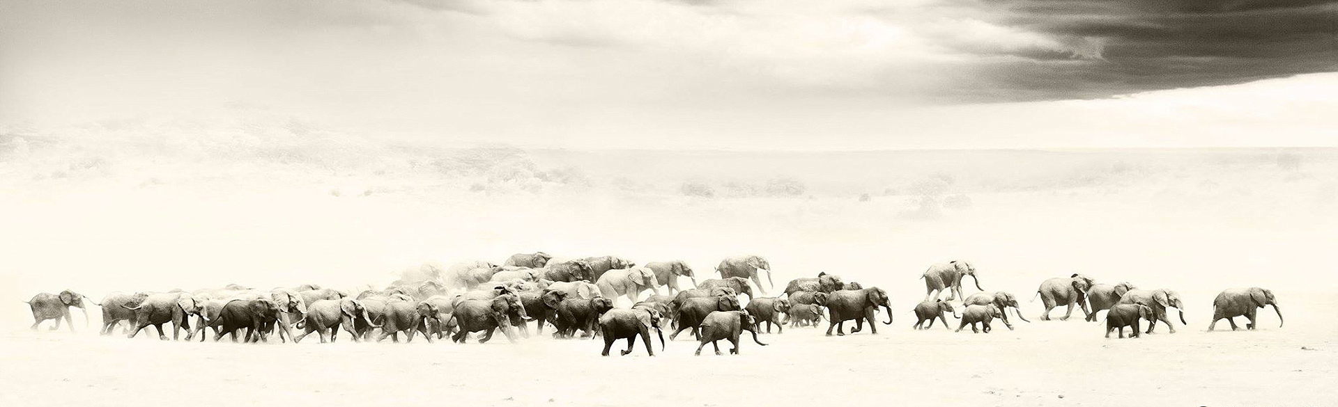 Elephant stampede in Hwange National Park by Tami Walker