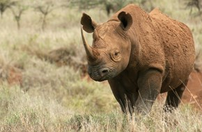 Black rhino courtesy Borana