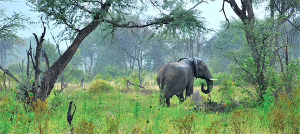 Green season safaris – what, why, when, where and how
