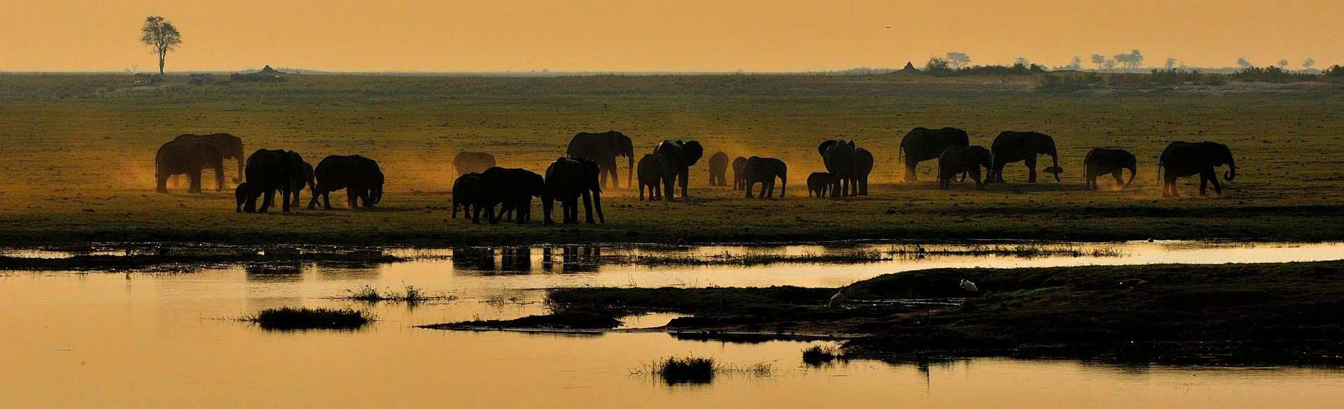 Chobe elephants courtesy Noel Smith