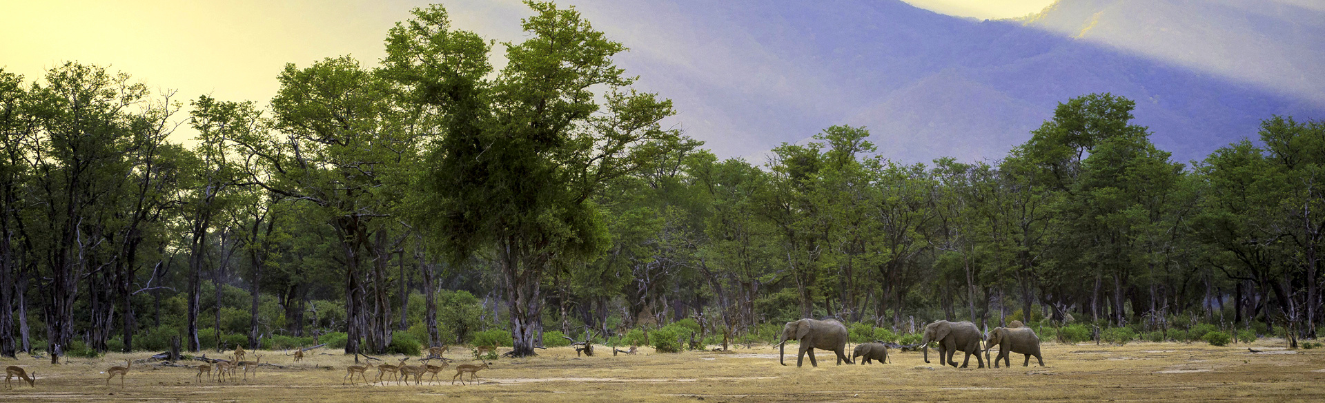 Elephants on the Mana Pools floodplain by Dana Allen courtesy Wilderness Safaris
