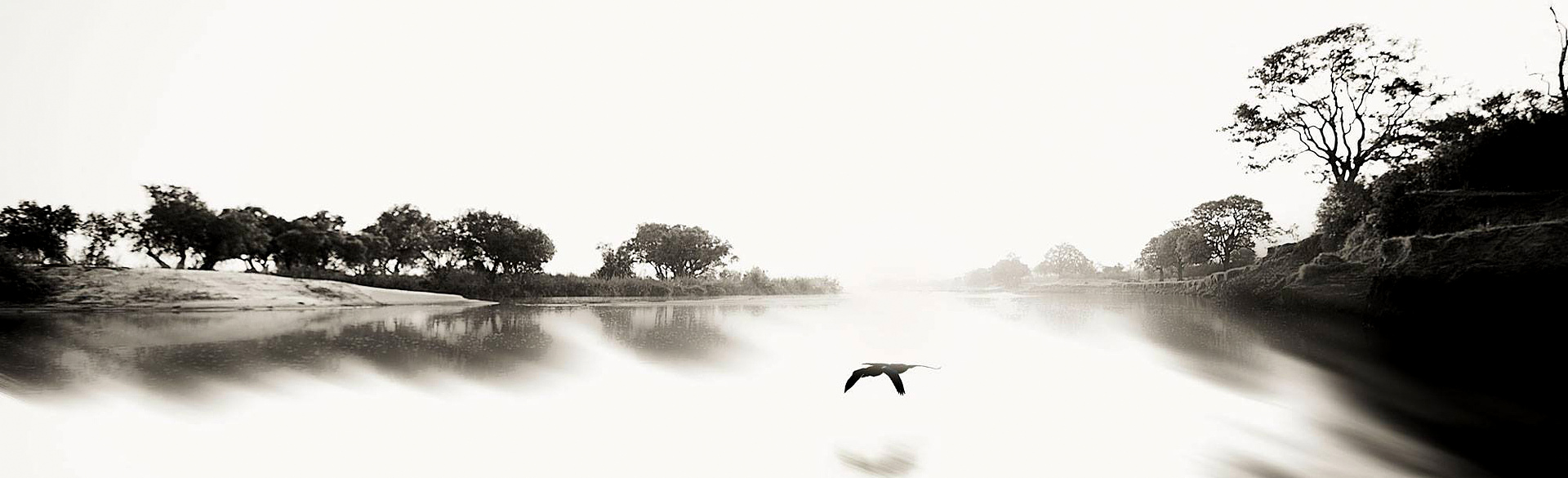 'Silent World' Siansimba, Zambezi National Park by Tami Walker