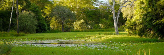 waterpan gorongosa national park