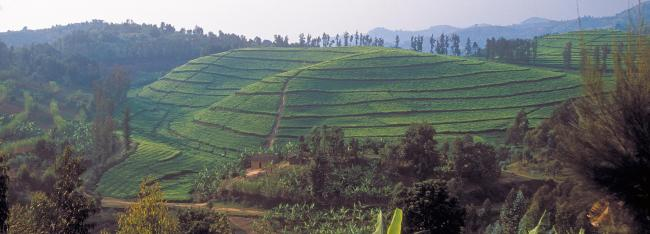 rwf cultivated fields j