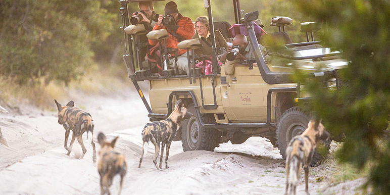 Wild dog encounter with Nkosi of Letaka Safaris - courtesy Grant Reed