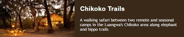 A walking safari between two seasonal camps with John Coppinger's Takika guides in the Luangwa's Chikoko area