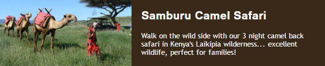Walk with camels in Kenya