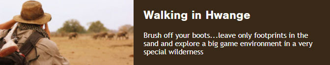 Walking in Hwange Brush off your boots...leave only footprints in the sand and explore a big game environment in a very special wilderness
